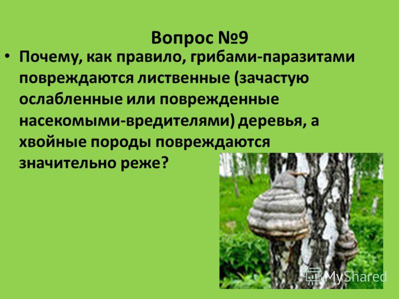 Вопрос 9 Почему, как правило, грибами-паразитами повреждаются лиственные (зачастую ослабленные или поврежденные насекомыми-вредителями) деревья, а хвойные породы повреждаются значительно реже?
