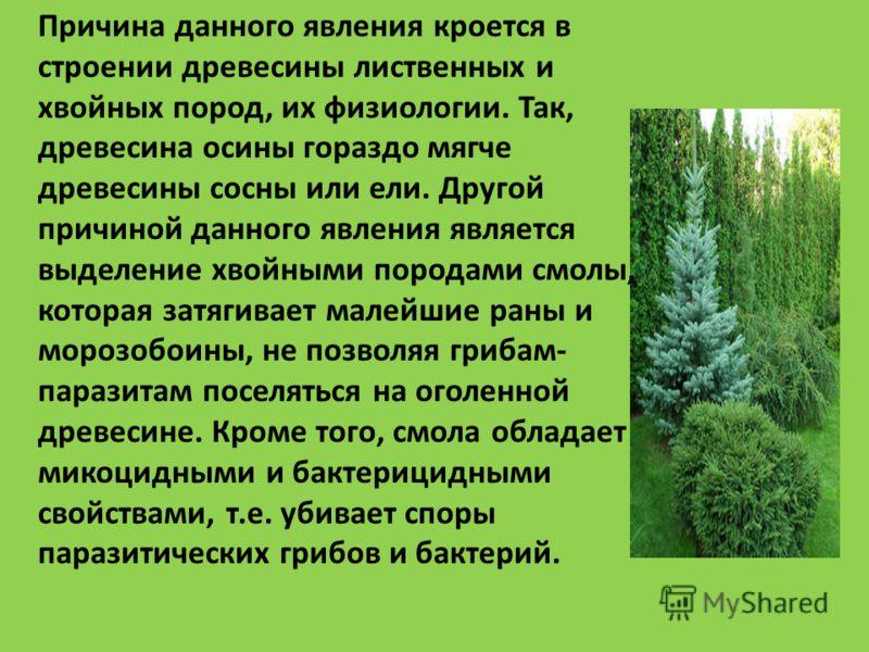 Причина данного явления кроется в строении древесины лиственных и хвойных пород, их физиологии. Так, древесина осины гораздо мягче древесины сосны или ели. Другой причиной данного явления является выделение хвойными породами смолы, которая затягивает