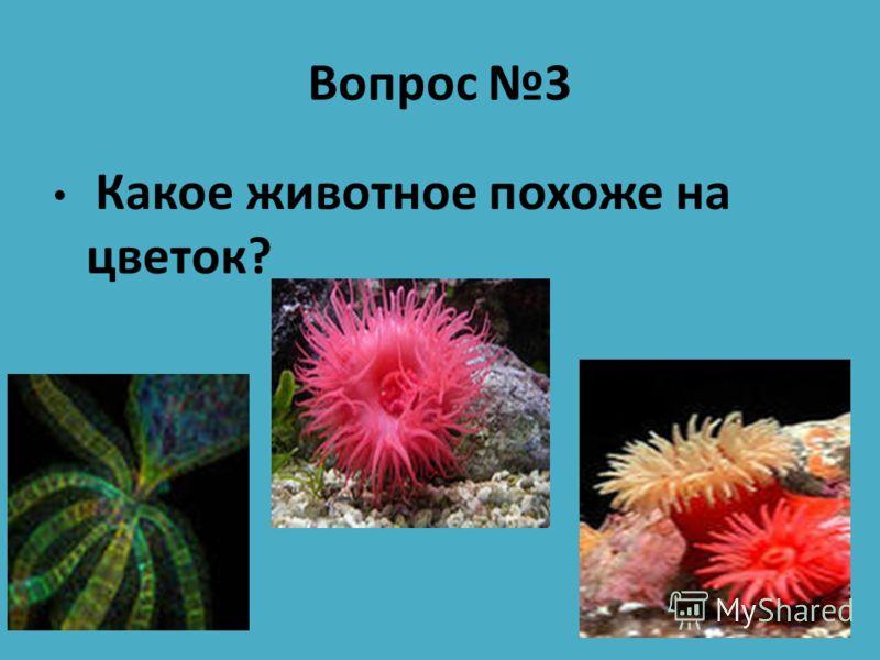 Вопрос 3 Какое животное похоже на цветок?