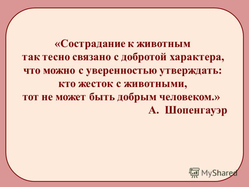 «Сострадание к животным так тесно связано с добротой характера, что можно с уверенностью утверждать: кто жесток с животными, тот не может быть добрым человеком.» А. Шопенгауэр