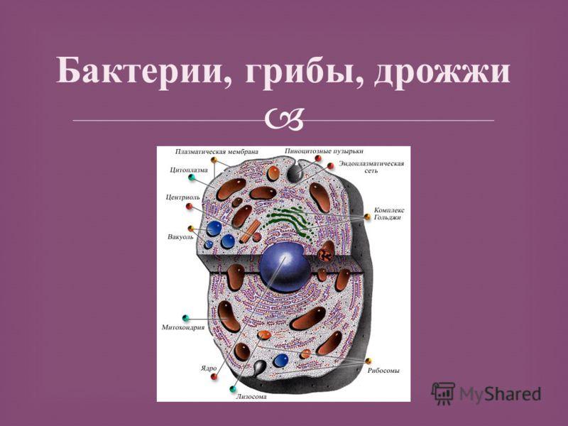 Презентация на тему углеводы в медицине