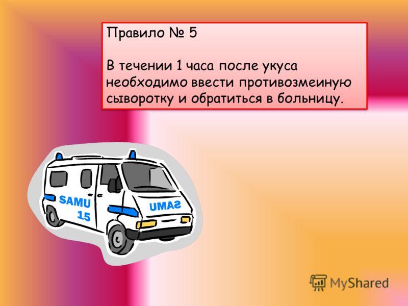 Правило 4 При укусе пострадавшему необходимо НЕМЕДЛЕННО оказать первую медицинскую помощь! Правило 4 При укусе пострадавшему необходимо НЕМЕДЛЕННО оказать первую медицинскую помощь!