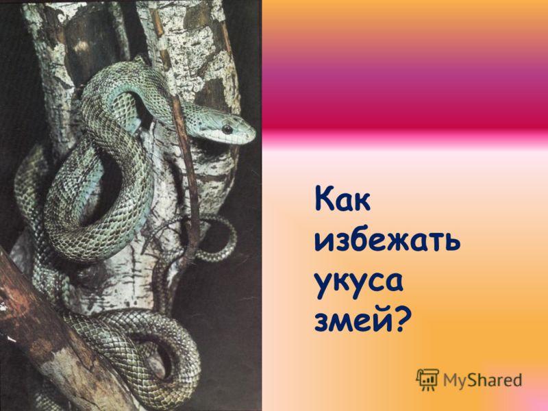 Следы укуса змей 1 – 5 – следы укуса ядовитых змей 6 – следы укуса неядовитых змей