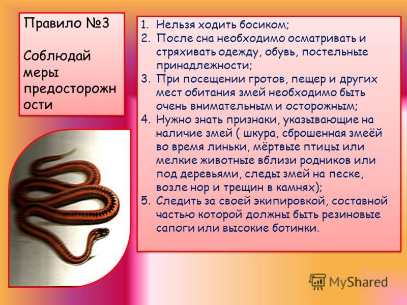 Правило 2. Никогда не пытайся хватить или удержать змею, она обязательно будет защищаться и может укусить Правило 2. Никогда не пытайся хватить или удержать змею, она обязательно будет защищаться и может укусить