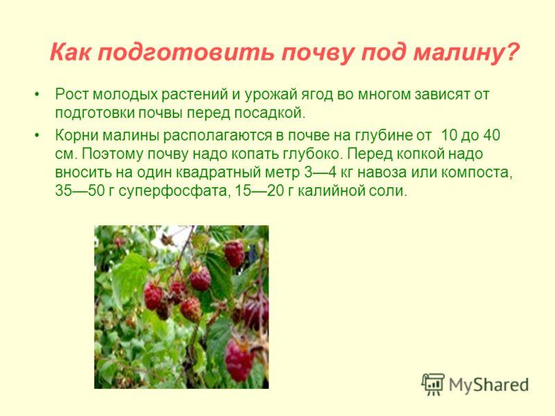 Как подготовить почву под малину? Рост молодых растений и урожай ягод во многом зависят от подготовки почвы перед посадкой. Корни малины располагаются в почве на глубине от 10 до 40 см. Поэтому почву надо копать глубоко. Перед копкой надо вносить на