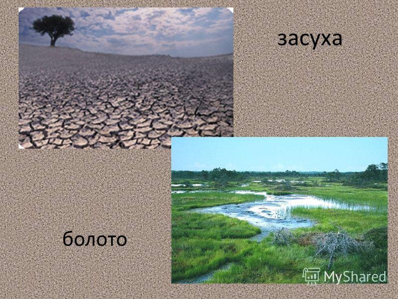 засуха болото
