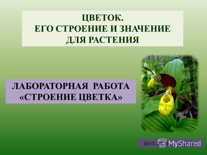 Уроки презентации ботаники 6 класс