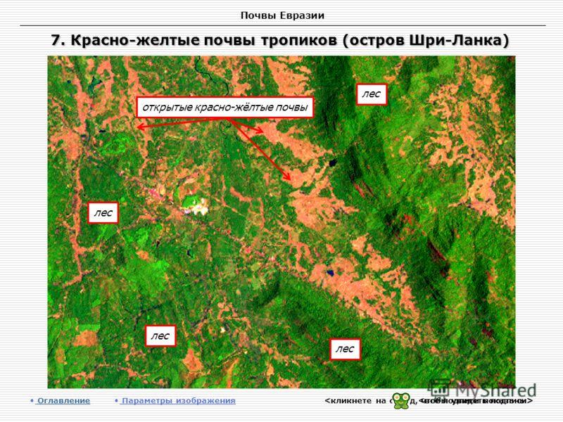 Почвы Евразии 7. Красно-желтые почвы тропиков (остров Шри-Ланка) Оглавление Оглавление Параметры изображения лес открытые красно-жёлтые почвы
