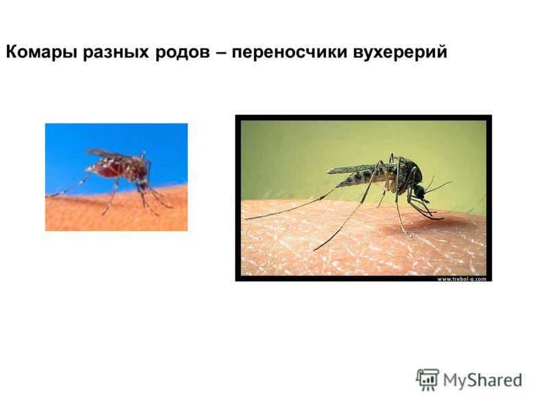 Комары разных родов – переносчики вухерерий