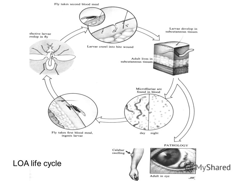 LOA life cycle