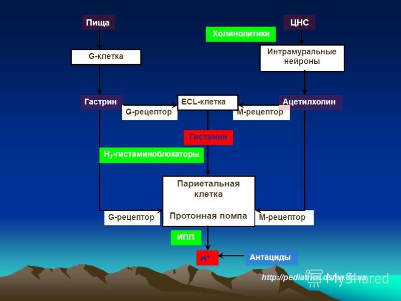 http://pediatrics.dsma.dp.ua Париетальная клетка Протонная помпа G-клетка Интрамуральные нейроны ПищаЦНС Гастрин М-рецептор G-рецептор М-рецептор Ацетилхолин ECL-клетка Н+Н+ Н 2 -гистаминоблокаторы ИПП Антациды Холинолитики Гистамин