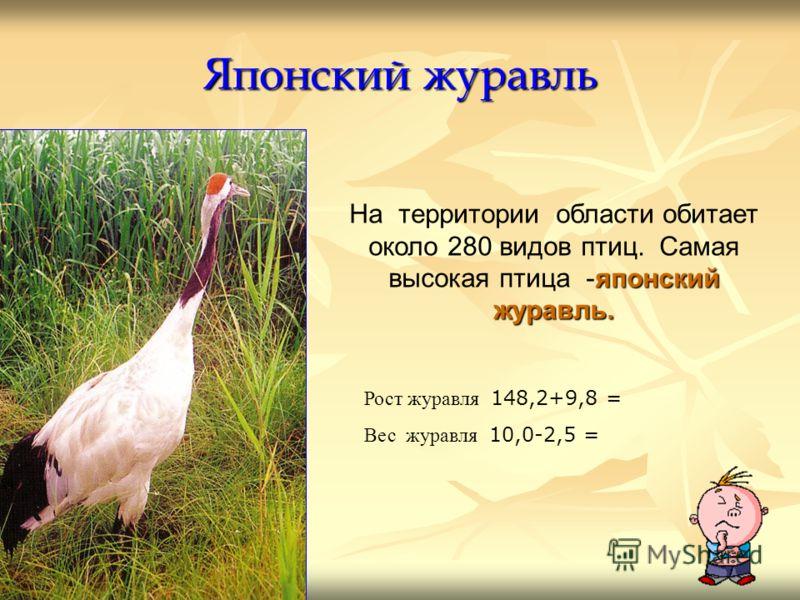 Японский журавль японский журавль. На территории области обитает около 280 видов птиц. Самая высокая птица -японский журавль. Рост журавля 148,2+9,8 = Вес журавля 10,0-2,5 =