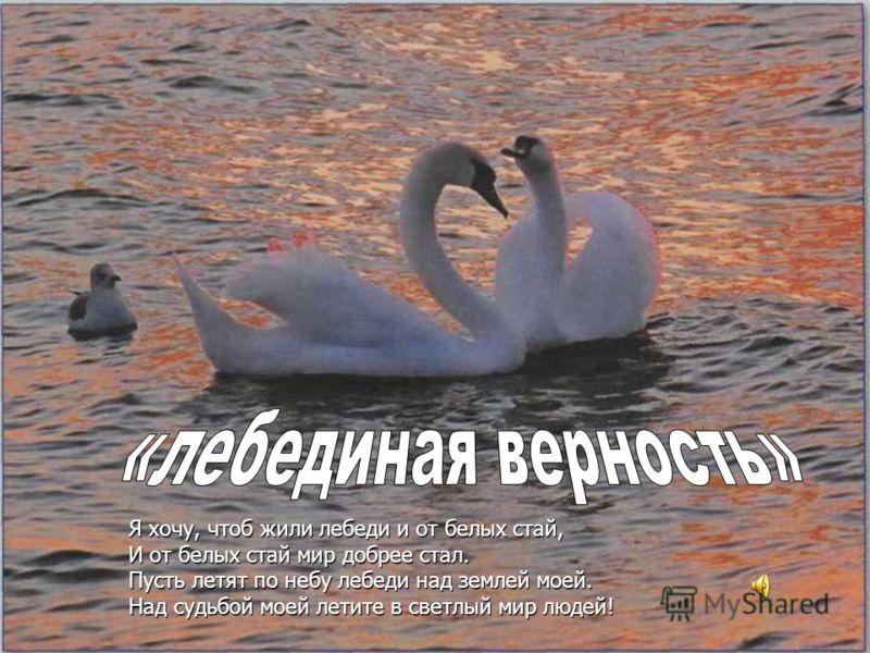Я хочу, чтоб жили лебеди и от белых стай, И от белых стай мир добрее стал. Пусть летят по небу лебеди над землей моей. Над судьбой моей летите в светлый мир людей!