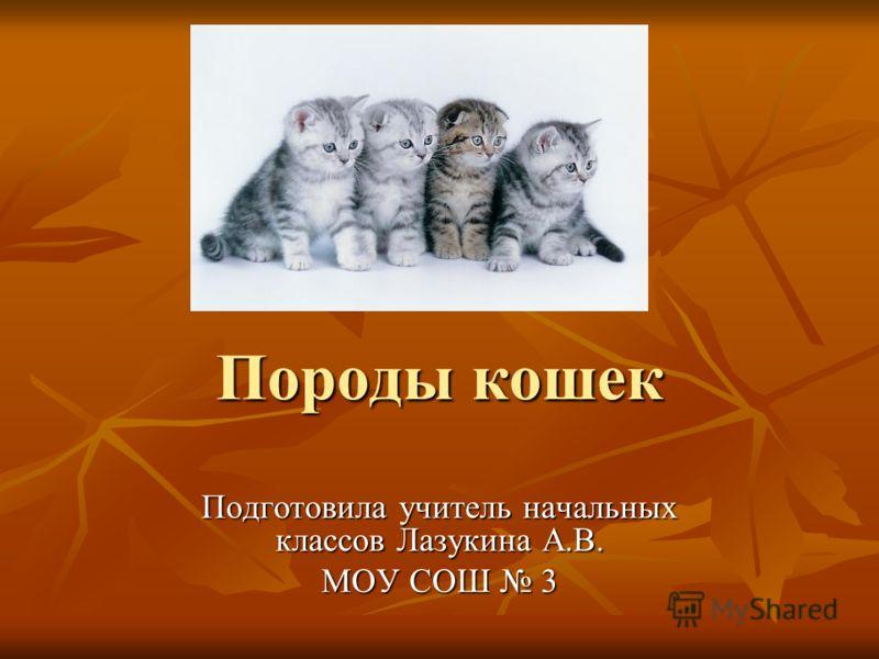 Породы кошек Подготовила учитель начальных классов Лазукина А.В. МОУ СОШ 3