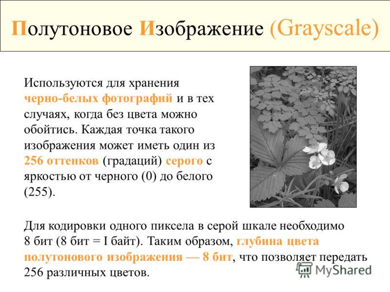 Полутоновое Изображение ( Grayscale) Используются для хранения черно-белых фотографий и в тех случаях, когда без цвета можно обойтись. Каждая точка такого изображения может иметь один из 256 оттенков (градаций) серого с яркостью от черного (0) до бел
