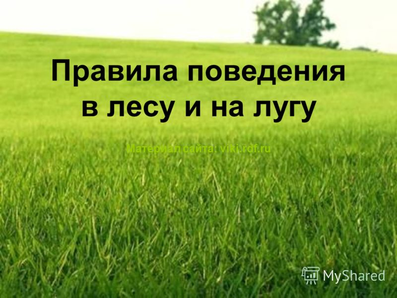 Правила поведения в лесу и на лугу Материал сайта: viki.rdf.ru