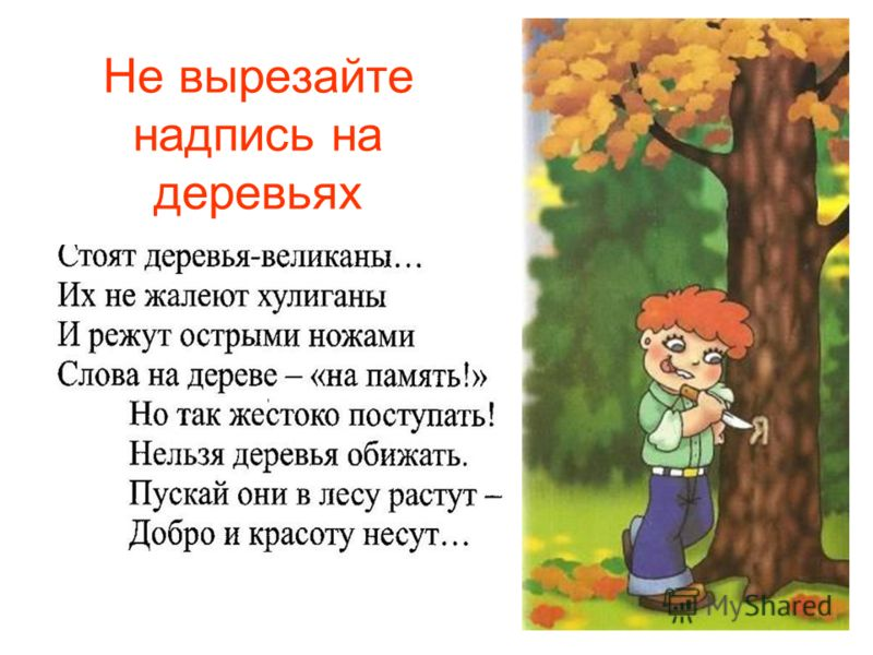 Не вырезайте надпись на деревьях