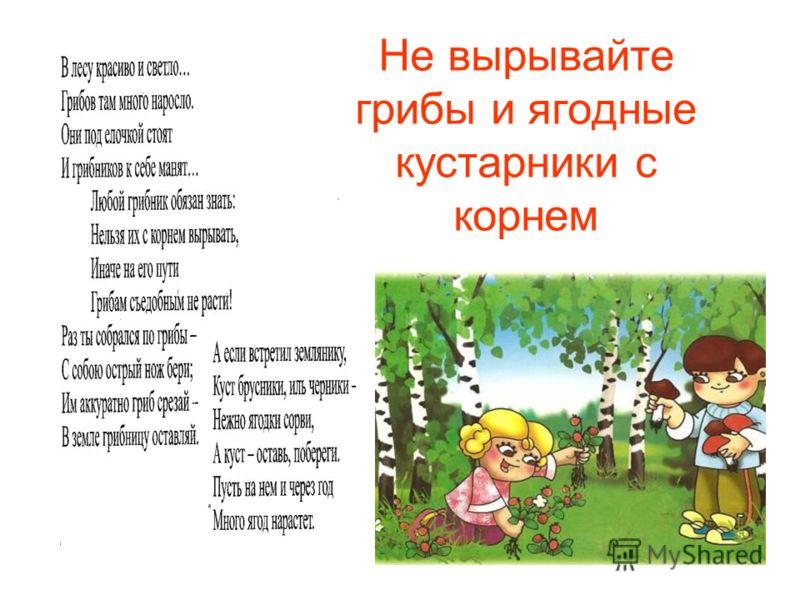 Не вырывайте грибы и ягодные кустарники с корнем
