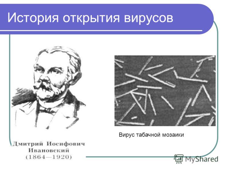 История открытия вирусов Вирус табачной мозаики