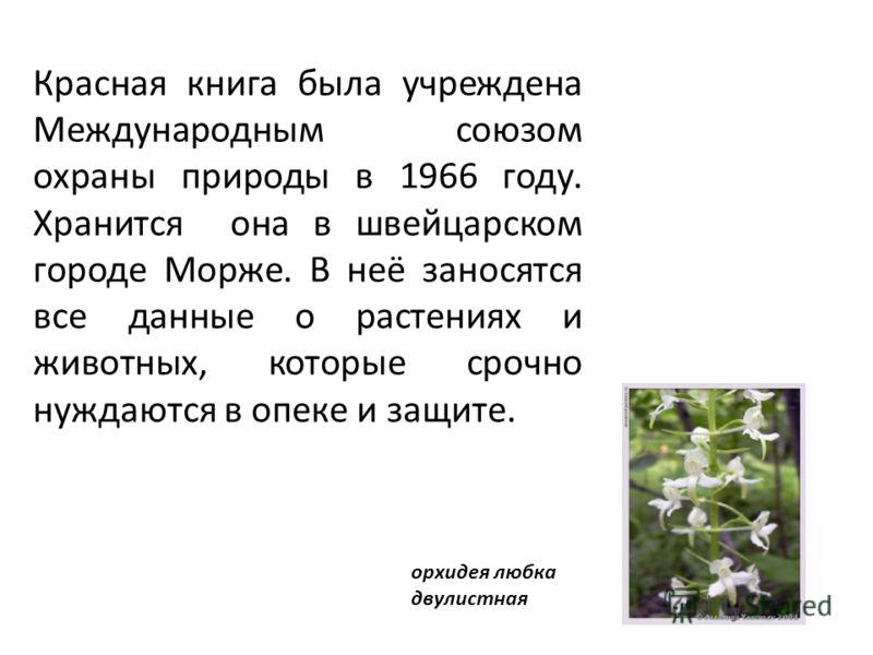 Красная книга была учреждена Международным союзом охраны природы в 1966 году. Хранится она в швейцарском городе Морже. В неё заносятся все данные о растениях и животных, которые срочно нуждаются в опеке и защите. орхидея любка двулистная