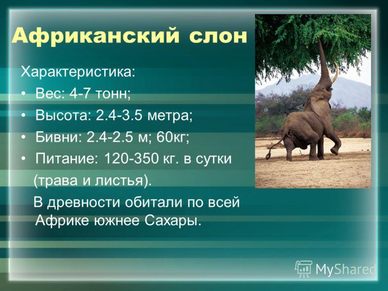 Африканский слон Характеристика: Вес: 4-7 тонн; Высота: 2.4-3.5 метра; Бивни: 2.4-2.5 м; 60кг; Питание: 120-350 кг. в сутки (трава и листья). В древности обитали по всей Африке южнее Сахары.