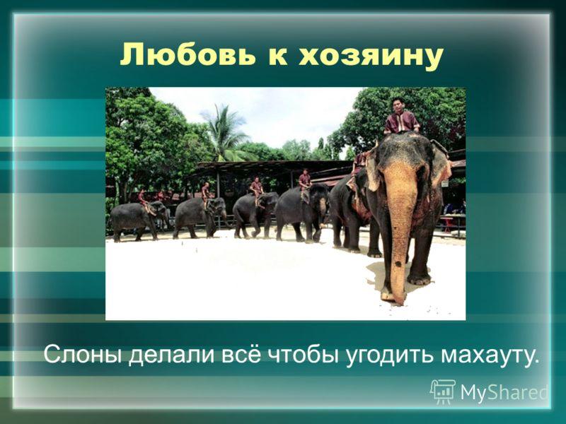 Любовь к хозяину Слоны делали всё чтобы угодить махауту.