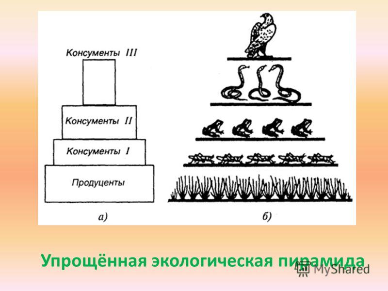 Упрощённая экологическая пирамида