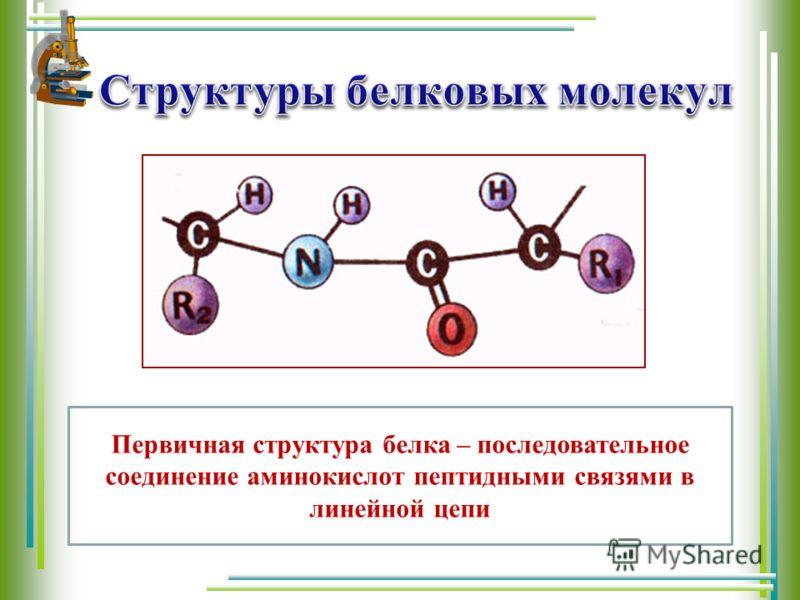 Первичная структура белка – последовательное соединение аминокислот пептидными связями в линейной цепи