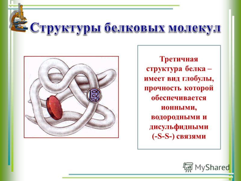 Третичная структура белка – имеет вид глобулы, прочность которой обеспечивается ионными, водородными и дисульфидными (-S-S-) связями