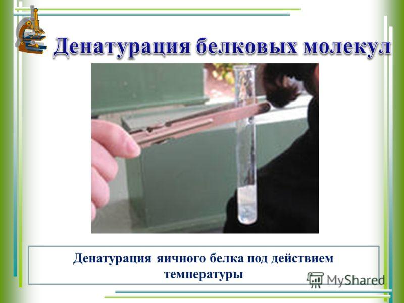 Денатурация яичного белка под действием температуры