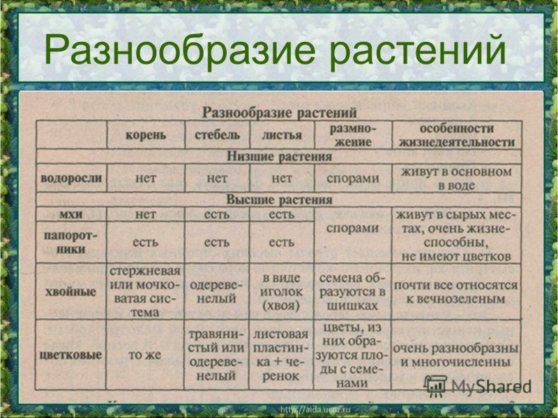 06.11.201210 Разнообразие растений