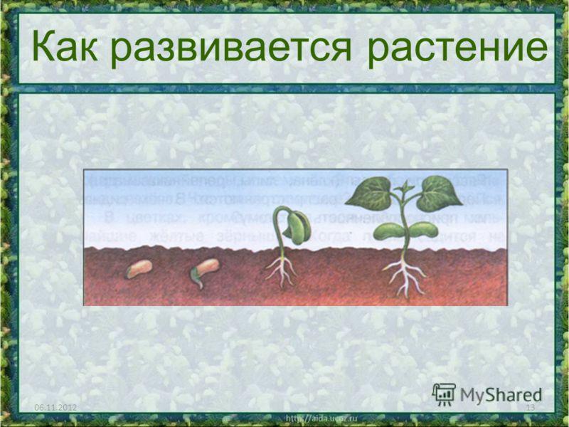 06.11.201213 Как развивается растение