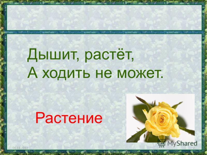 06.11.20122 Дышит, растёт, А ходить не может. Растение