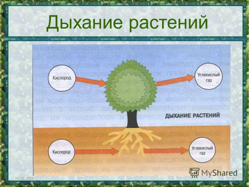 06.11.20123 Дыхание растений