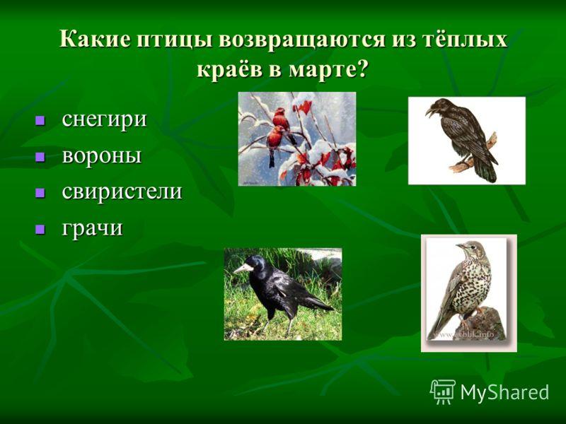 Какие птицы возвращаются из тёплых краёв в марте? снегири снегири вороны вороны свиристели свиристели грачи грачи