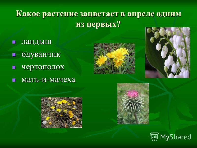 Какое растение зацветает в апреле одним из первых? ландыш ландыш одуванчик одуванчик чертополох чертополох мать-и-мачеха мать-и-мачеха