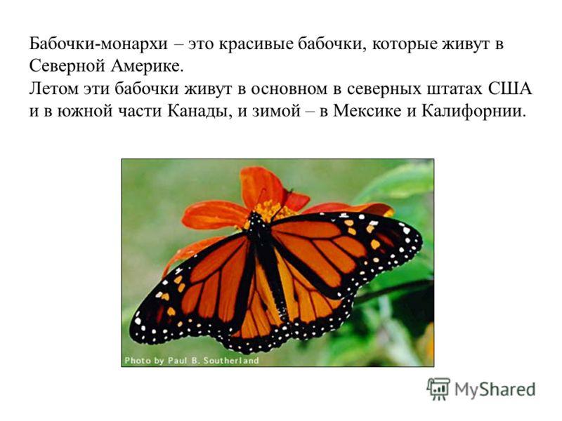 Бабочки-монархи – это красивые бабочки, которые живут в Северной Америке. Летом эти бабочки живут в основном в северных штатах США и в южной части Канады, и зимой – в Мексике и Калифорнии.