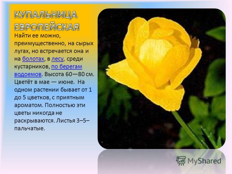 Найти ее можно, преимущественно, на сырых лугах, но встречается она и на болотах, в лесу, среди кустарников, по берегам водоемов. Высота 6080 см. Цветёт в мае июне. На одном растении бывает от 1 до 5 цветков, с приятным ароматом. Полностью эти цветы