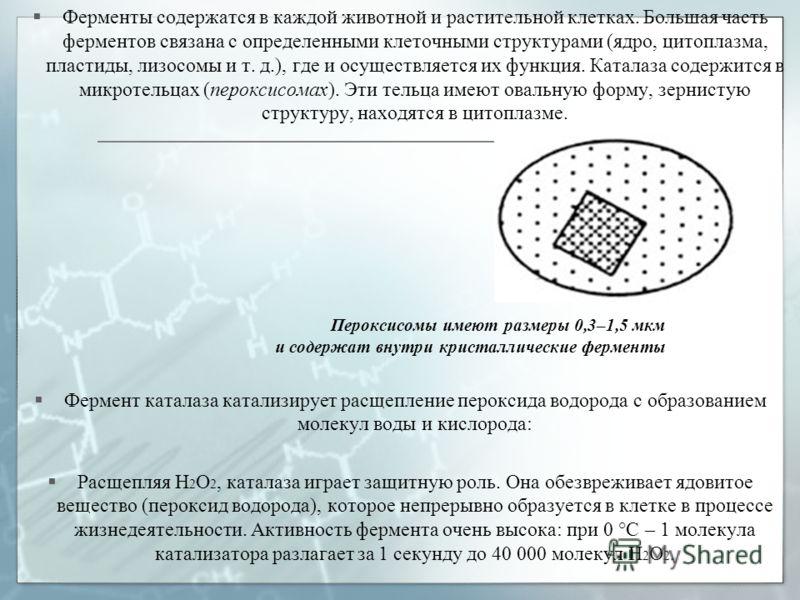 Ферменты содержатся в каждой животной и растительной клетках. Большая часть ферментов связана с определенными клеточными структурами (ядро, цитоплазма, пластиды, лизосомы и т. д.), где и осуществляется их функция. Каталаза содержится в микротельцах (