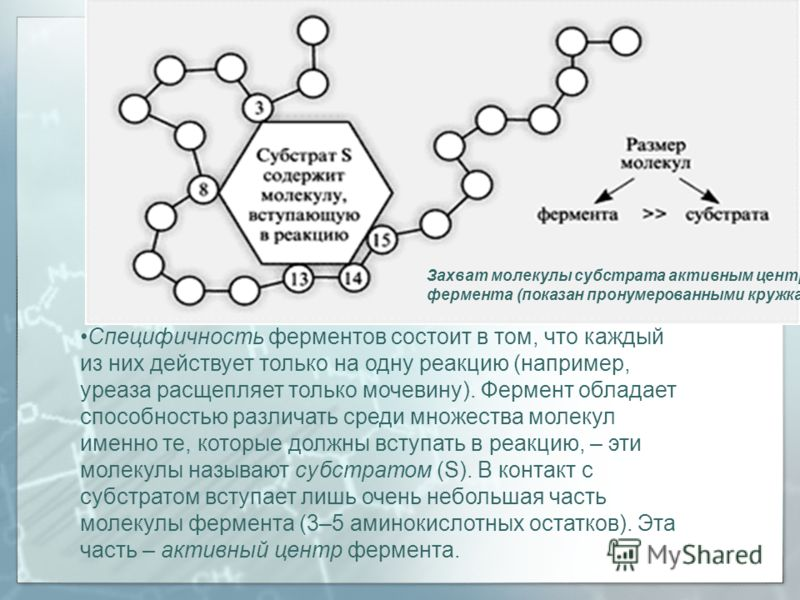 Специфичность ферментов состоит в том, что каждый из них действует только на одну реакцию (например, уреаза расщепляет только мочевину). Фермент обладает способностью различать среди множества молекул именно те, которые должны вступать в реакцию, – э
