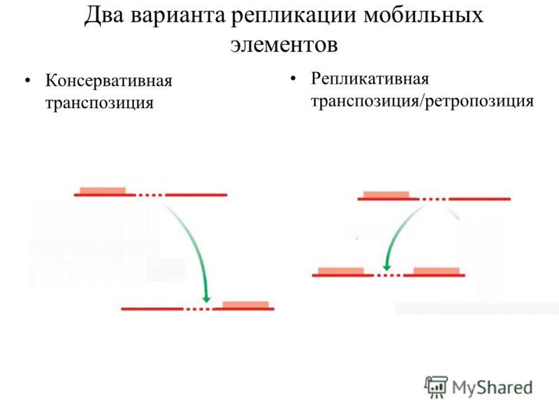 Два варианта репликации мобильных элементов Консервативная транспозиция Репликативная транспозиция/ретропозиция