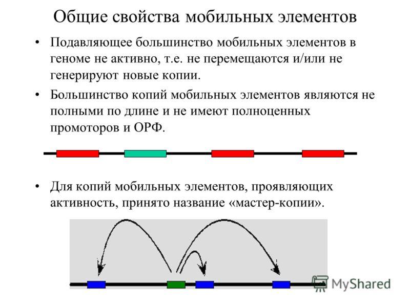 Общие свойства мобильных элементов Подавляющее большинство мобильных элементов в геноме не активно, т.е. не перемещаются и/или не генерируют новые копии. Большинство копий мобильных элементов являются не полными по длине и не имеют полноценных промот