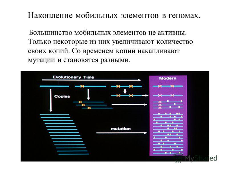 Накопление мобильных элементов в геномах. Большинство мобильных элементов не активны. Только некоторые из них увеличивают количество своих копий. Со временем копии накапливают мутации и становятся разными.
