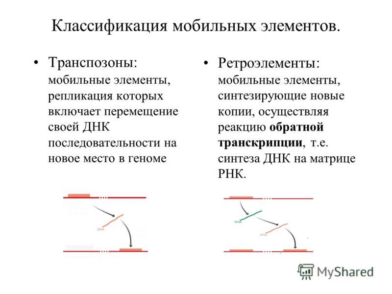 Классификация мобильных элементов. Транспозоны: мобильные элементы, репликация которых включает перемещение своей ДНК последовательности на новое место в геноме Ретроэлементы: мобильные элементы, синтезирующие новые копии, осуществляя реакцию обратно