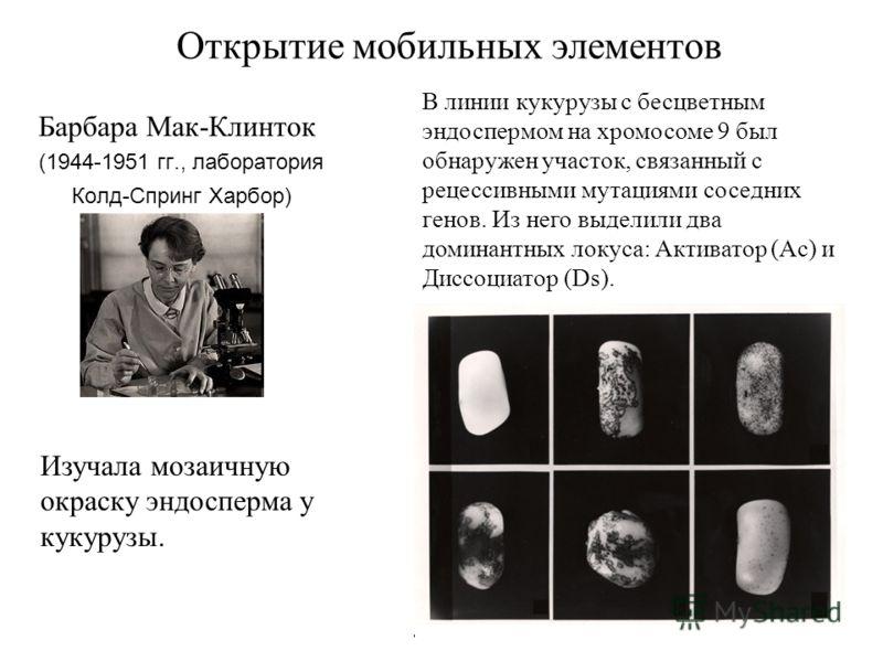 Открытие мобильных элементов Барбара Мак-Клинток (1944-1951 гг., лаборатория Колд-Спринг Харбор) В линии кукурузы с бесцветным эндоспермом на хромосоме 9 был обнаружен участок, связанный с рецессивными мутациями соседних генов. Из него выделили два д