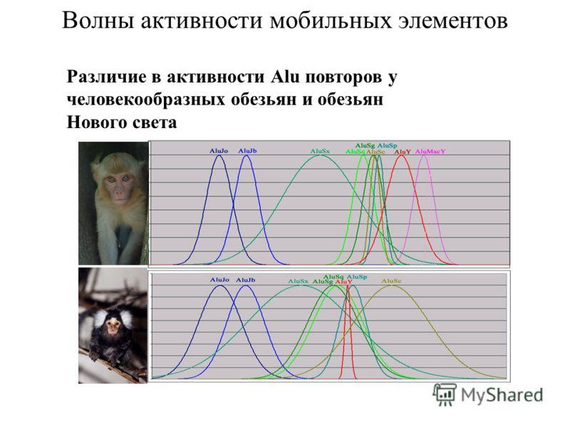 Волны активности мобильных элементов Различие в активности Alu повторов у человекообразных обезьян и обезьян Нового света