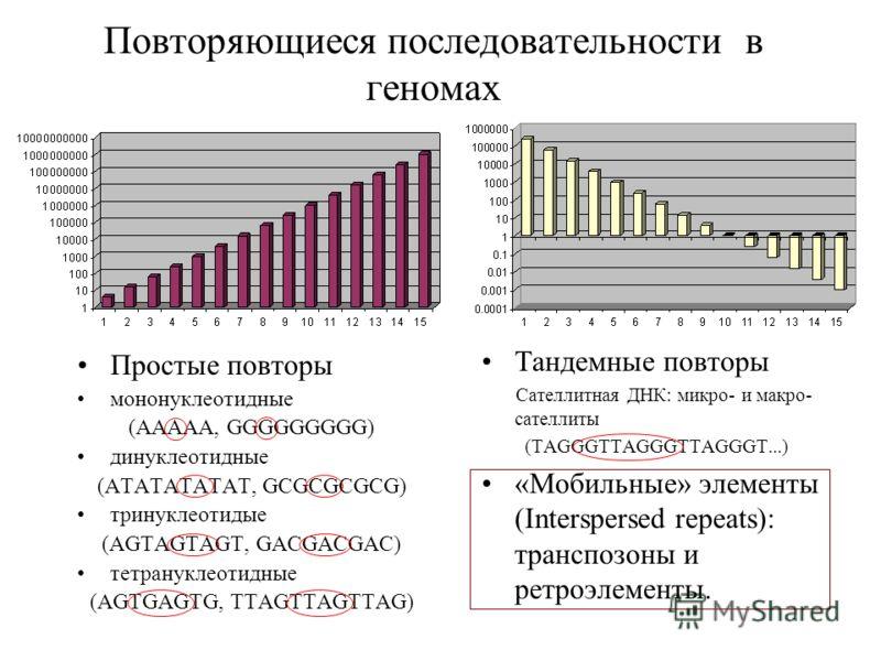 Повторяющиеся последовательности в геномах Простые повторы мононуклеотидные (AAAAA, GGGGGGGGG) динуклеотидные (ATATATATAT, GCGCGCGCG) тринуклеотидые (AGTAGTAGT, GACGACGAC) тетрануклеотидные (AGTGAGTG, TTAGTTAGTTAG) Тандемные повторы Сателлитная ДНК: