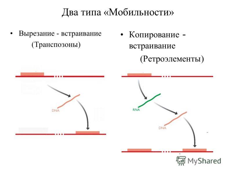 Два типа «Мобильности» Вырезание - встраивание (Транспозоны) Копирование - встраивание (Ретроэлементы)
