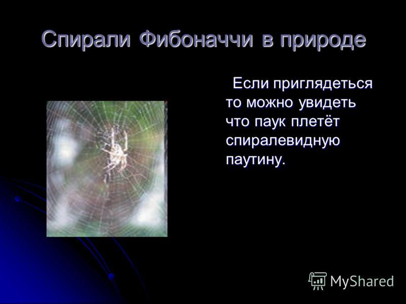 Спирали Фибоначчи в природе Если приглядеться то можно увидеть что паук плетёт спиралевидную паутину. Если приглядеться то можно увидеть что паук плет