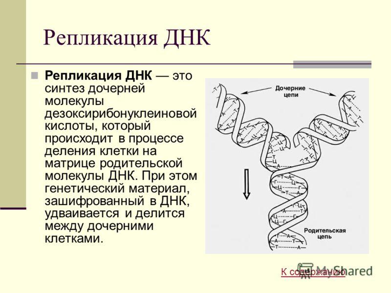 Репликация ДНК Репликация ДНК это синтез дочерней молекулы дезоксирибонуклеиновой кислоты, который происходит в процессе деления клетки на матрице родительской молекулы ДНК. При этом генетический материал, зашифрованный в ДНК, удваивается и делится м